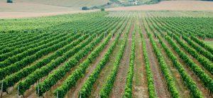 Agriculture Lands